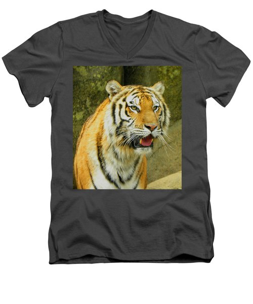 Men's V-Neck T-Shirt featuring the photograph Tiger Stare by Sandi OReilly