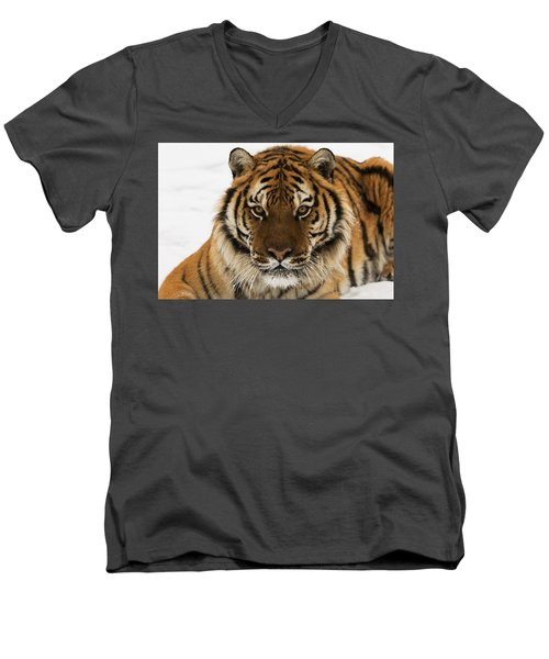 Tiger Stare Men's V-Neck T-Shirt