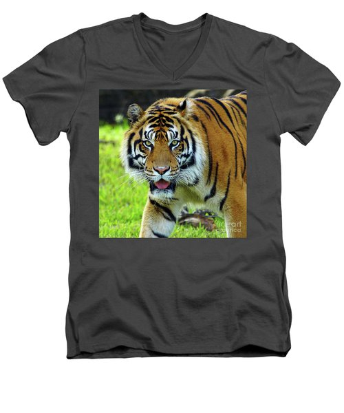 Tiger The Stare Men's V-Neck T-Shirt by Larry Nieland