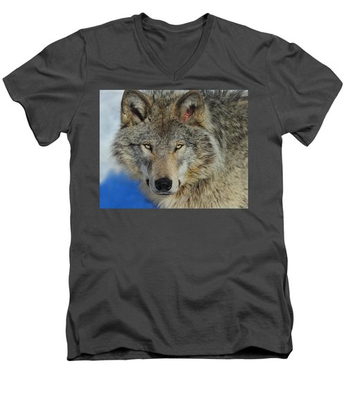 Timber Wolf Portrait Men's V-Neck T-Shirt by Tony Beck