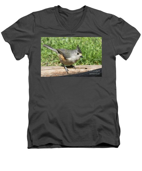 Titmouse Close Up Men's V-Neck T-Shirt