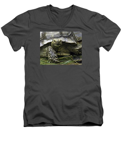 Men's V-Neck T-Shirt featuring the photograph Tortoise's Stare by Betty Denise