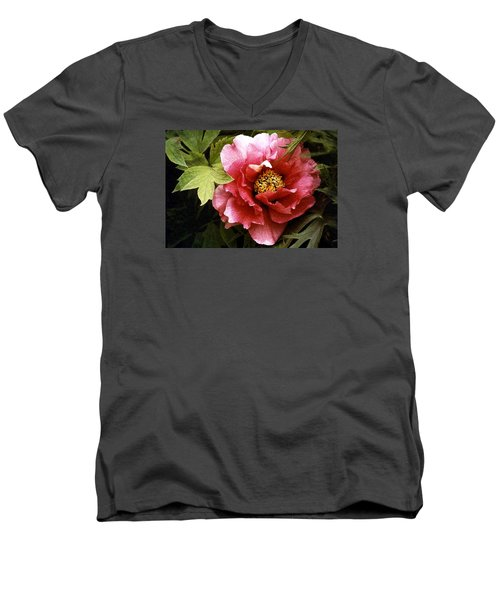 Tree Peony Men's V-Neck T-Shirt