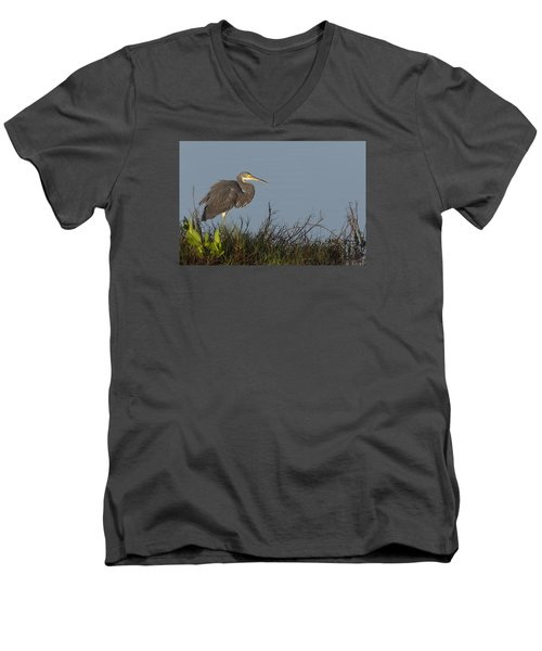 Tri-colored Heron In The Morning Light Men's V-Neck T-Shirt