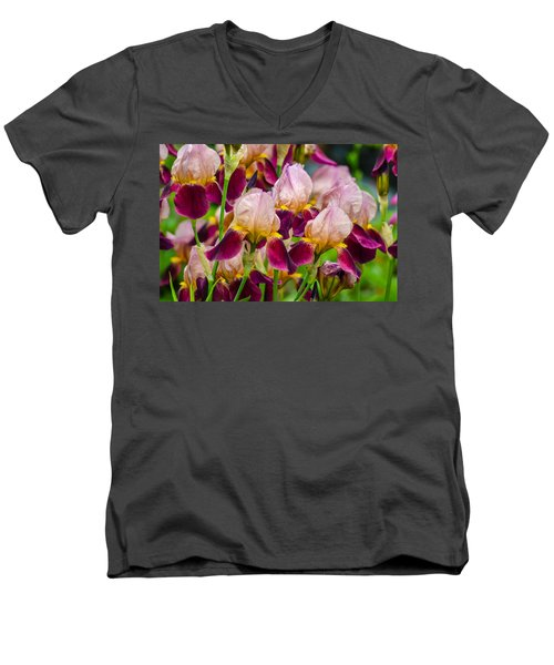 Tricolored Irisses Men's V-Neck T-Shirt