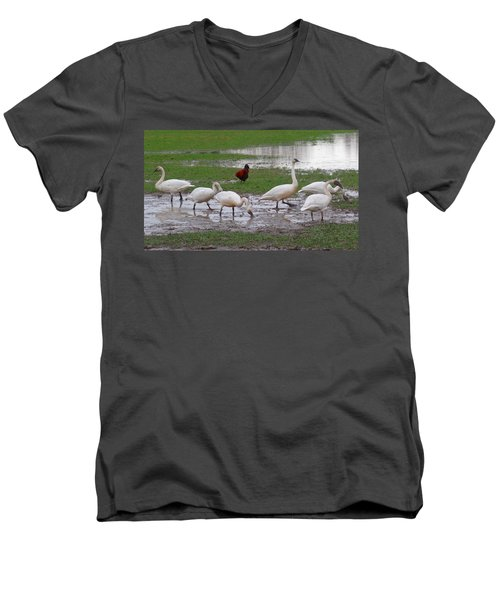 Men's V-Neck T-Shirt featuring the photograph Trumpeter Swans And Rooster by Karen Molenaar Terrell
