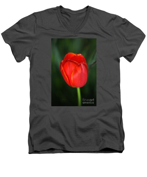Tulip Red With A Hint Of Yellow Men's V-Neck T-Shirt