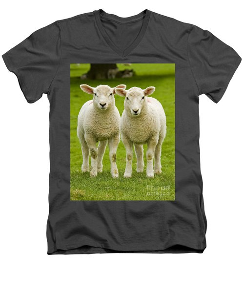 Twin Lambs Men's V-Neck T-Shirt by Meirion Matthias