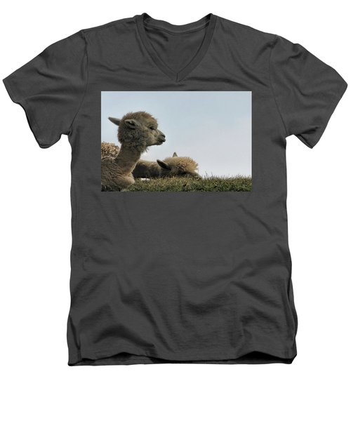 Two Alpaca Men's V-Neck T-Shirt by Pat Cook