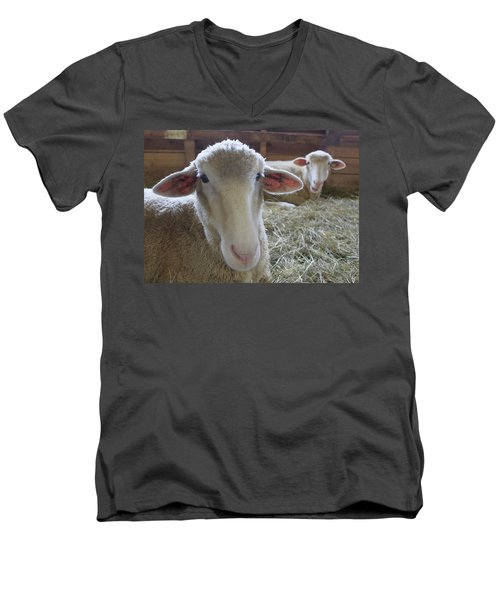 Two Funny Sheep In A Barn Men's V-Neck T-Shirt
