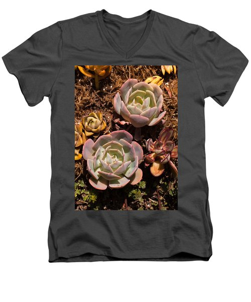 Men's V-Neck T-Shirt featuring the photograph Two Succulents  by Catherine Lau