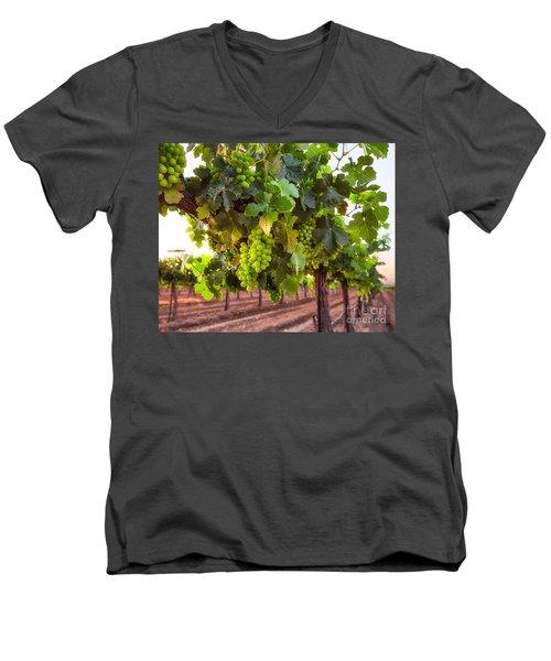 Vineyard 3 Men's V-Neck T-Shirt