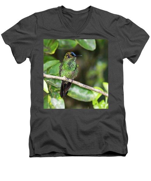 Violet-fronted Brilliiant Men's V-Neck T-Shirt