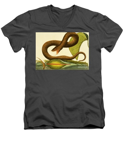 Viper Fusca Men's V-Neck T-Shirt by Mark Catesby