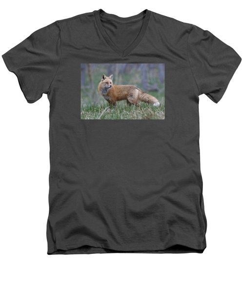 Men's V-Neck T-Shirt featuring the photograph Watchful by Gary Lengyel