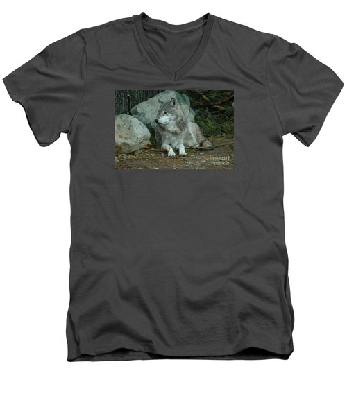 Watchful Wolf Men's V-Neck T-Shirt by Sandra Updyke