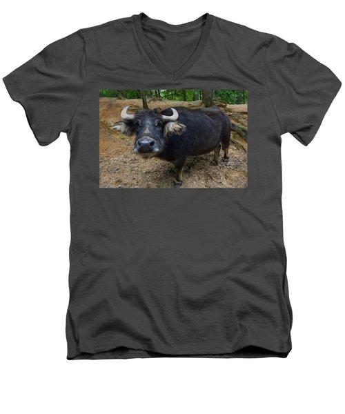 Water Buffalo On Dry Land Men's V-Neck T-Shirt by Chris Flees