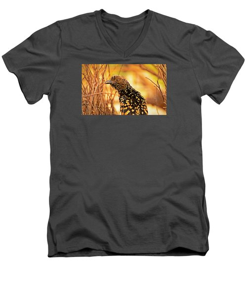 Western Bowerbird Men's V-Neck T-Shirt