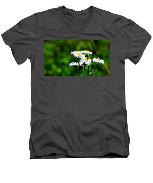 Bellis Daisy Men's V-Neck T-Shirt