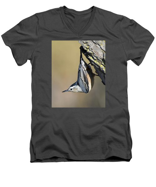 White-breasted Nuthatch Men's V-Neck T-Shirt by Stephen Flint