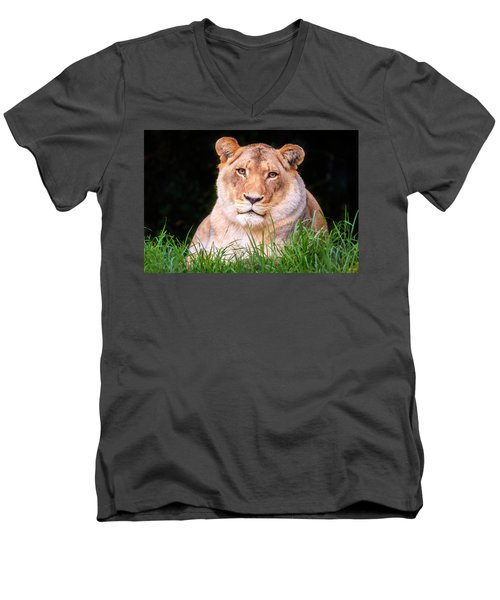 Men's V-Neck T-Shirt featuring the photograph White Lion by Alexey Stiop