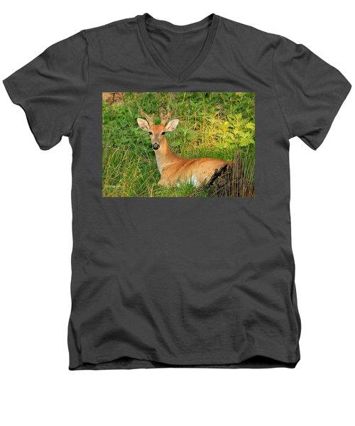 White-tail Buck Resting Men's V-Neck T-Shirt