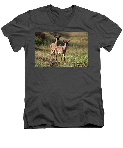 White-tailed Deer Men's V-Neck T-Shirt