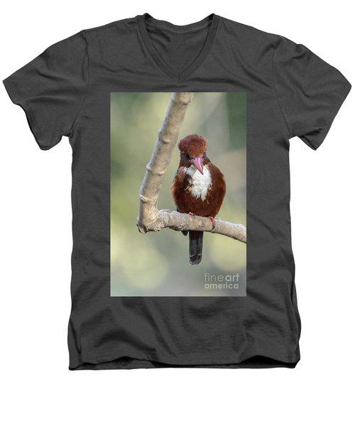 White-throated Kingfisher 01 Men's V-Neck T-Shirt