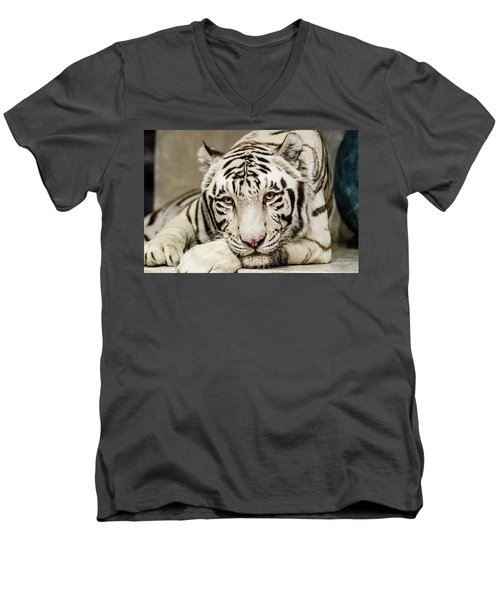 White Tiger Looking At You Men's V-Neck T-Shirt