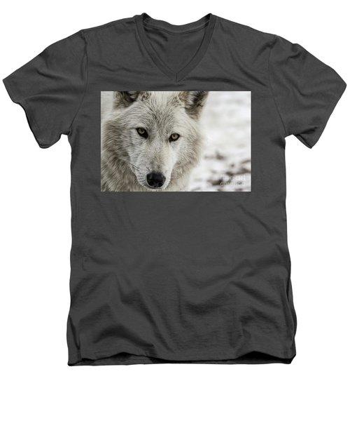 White Wolf II Men's V-Neck T-Shirt by Brad Allen Fine Art