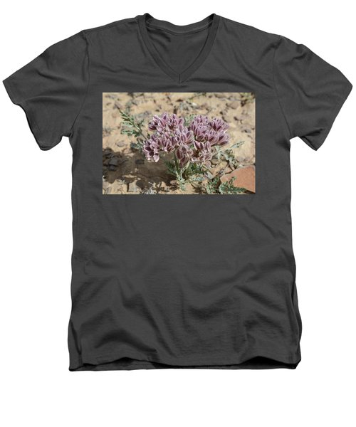 Men's V-Neck T-Shirt featuring the photograph Widewing Spring Parsley by Jenessa Rahn