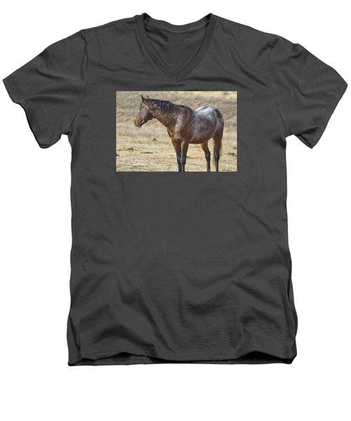 Wild Appaloosa Mustang Stallion Men's V-Neck T-Shirt