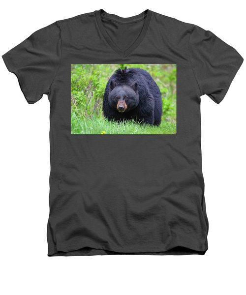 Wild Black Bear Men's V-Neck T-Shirt