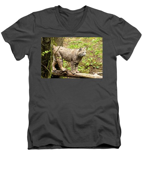 Wild Bobcat Men's V-Neck T-Shirt