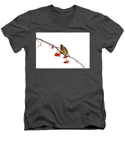 Winter Birds - Waxwing  Men's V-Neck T-Shirt