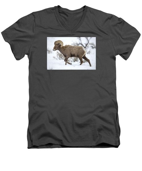 Winter Ram Men's V-Neck T-Shirt