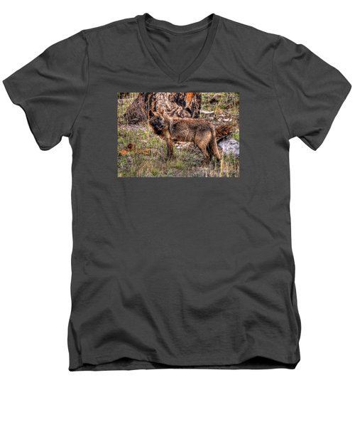 Wolf Looking Back Men's V-Neck T-Shirt by CR  Courson