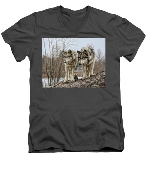 Men's V-Neck T-Shirt featuring the photograph Wolf Pair by Shari Jardina
