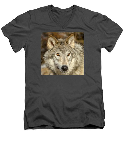 Wolf Portrait Men's V-Neck T-Shirt by Jack Bell