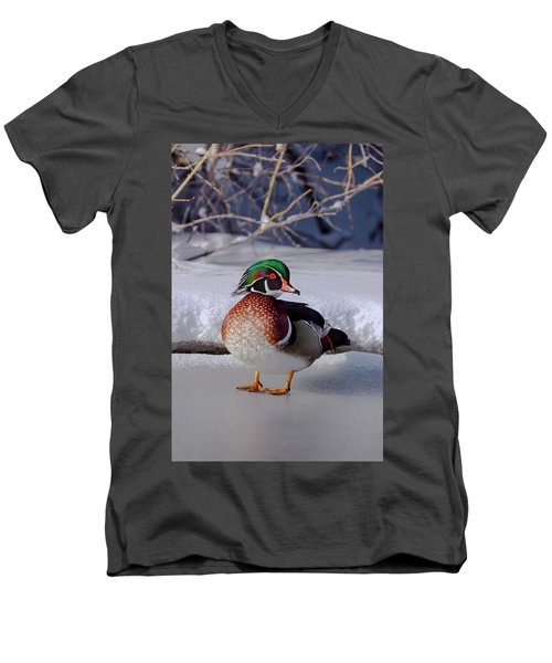 Wood Duck In Winter Snow And Ice, Montana, Usa Men's V-Neck T-Shirt