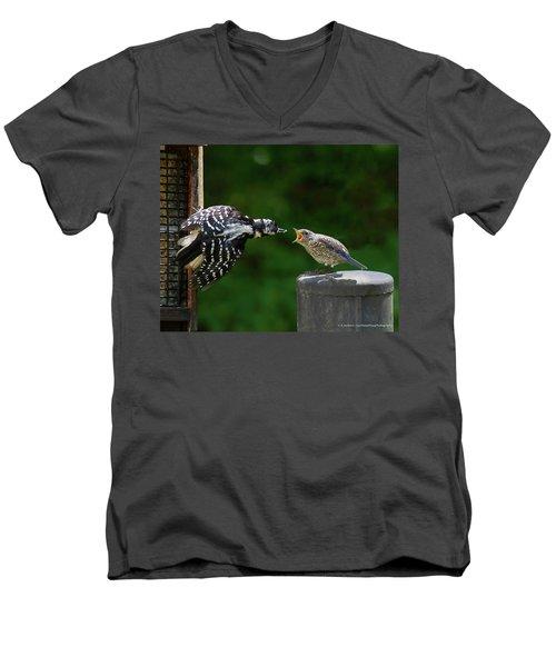 Woodpecker Feeding Bluebird Men's V-Neck T-Shirt by Robert L Jackson
