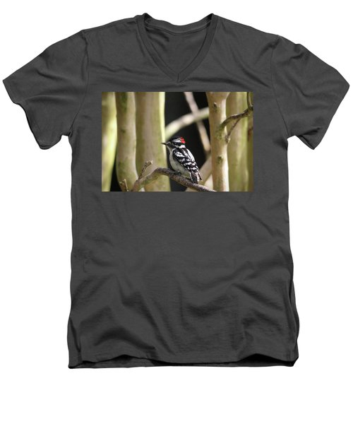 Downy Woodpecker Men's V-Neck T-Shirt