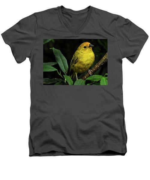 Yellow Bird Men's V-Neck T-Shirt
