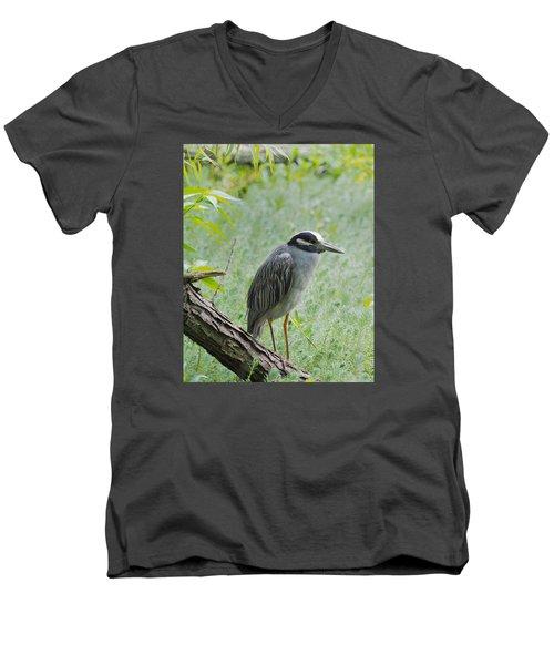 Yellow-crowned Night Heron 1 Men's V-Neck T-Shirt