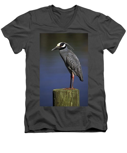 Yellow-crowned Night Heron Men's V-Neck T-Shirt by Sally Weigand