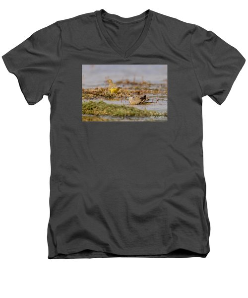 Men's V-Neck T-Shirt featuring the photograph Yellow Crowned Wagtail Juvenile Bath Time by Jivko Nakev