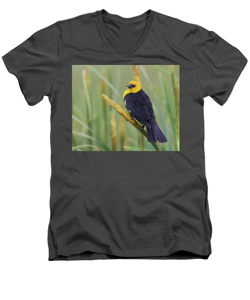 Yellow-headed Blackbird Men's V-Neck T-Shirt