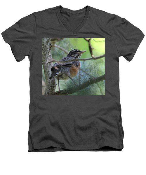 Young American Robin Setauket New York Men's V-Neck T-Shirt by Bob Savage