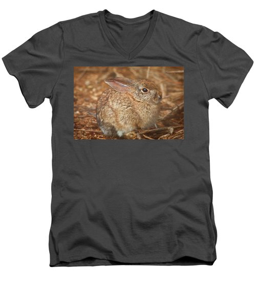 Young Cottontail In The Morning Men's V-Neck T-Shirt
