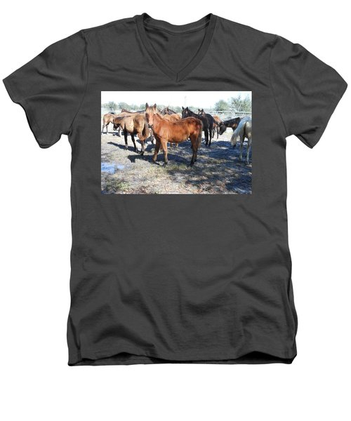 Men's V-Neck T-Shirt featuring the photograph Young Cracker Horses by Kay Gilley